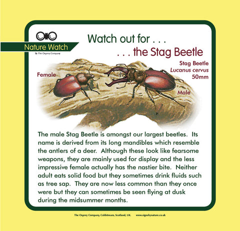 'Stag beetle' Nature Watch Panel