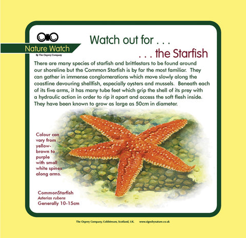 'Starfish' Nature Watch Panel