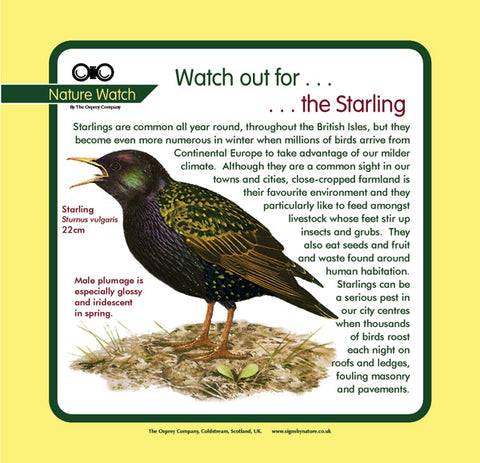 'Starling' Nature Watch Panel