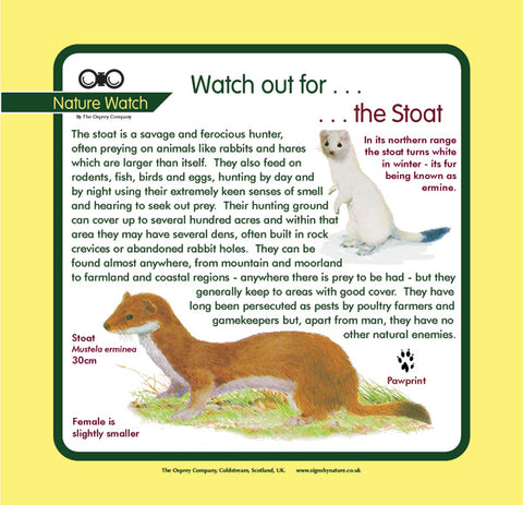 'Stoat' Nature Watch Panel