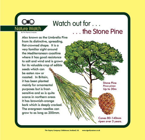 'Stone pine' Nature Watch Panel