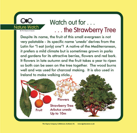'Strawberry tree' Nature Watch Panel