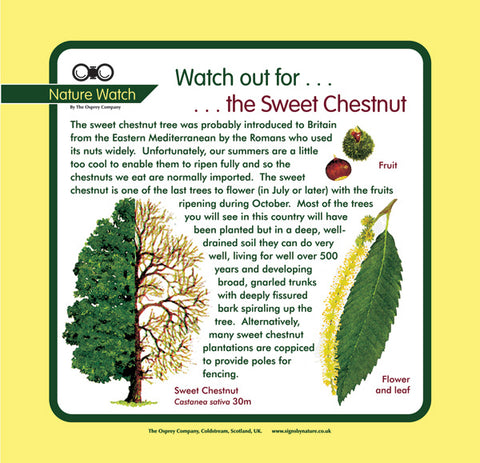 'Sweet chestnut' Nature Watch Panel