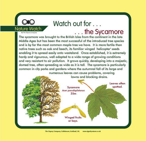 'Sycamore' Nature Watch Panel