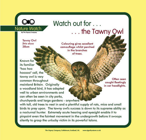 'Tawny owl' Nature Watch Panel