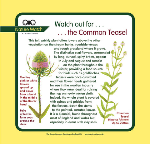 'Teasel' Nature Watch Panel