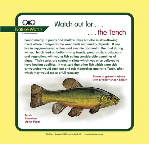 'Tench' Nature Watch Panel