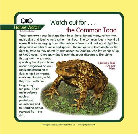 'Common toad' Nature Watch Panel