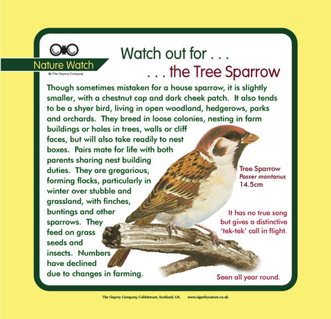 'Tree sparrow' Nature Watch Panel