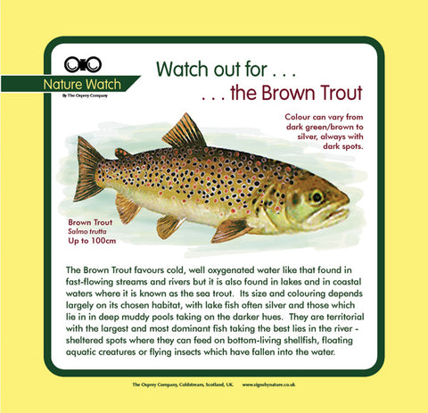 'Brown trout' Nature Watch Panel