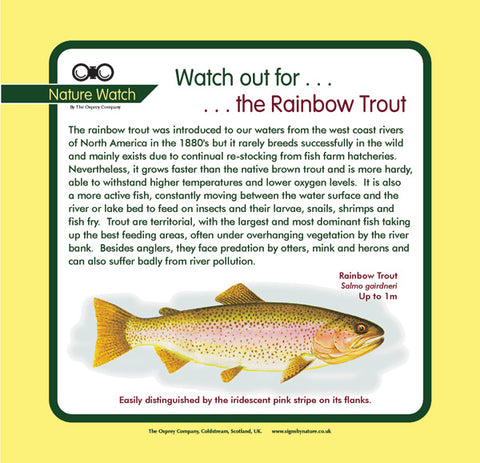 'Rainbow trout' Nature Watch Panel