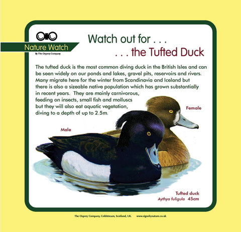 'Tufted duck' Nature Watch Panel