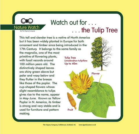 'Tulip tree' Nature Watch Panel