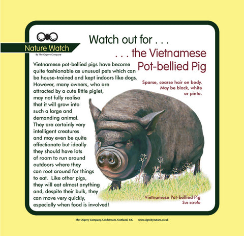 'Vietnamese pot-bellied pig' Nature Watch Panel