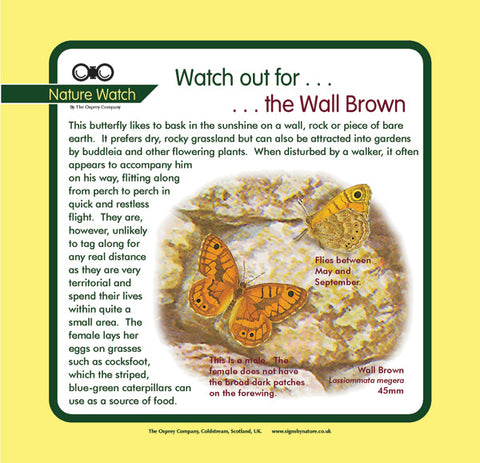 'Wall brown' Nature Watch Panel