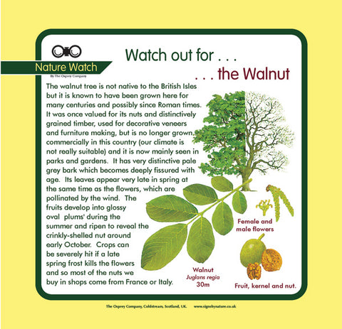 'Walnut' Nature Watch Panel