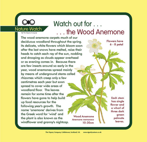 'Wood anemone' Nature Watch Panel