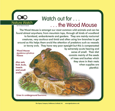 'Wood mouse' Nature Watch Panel