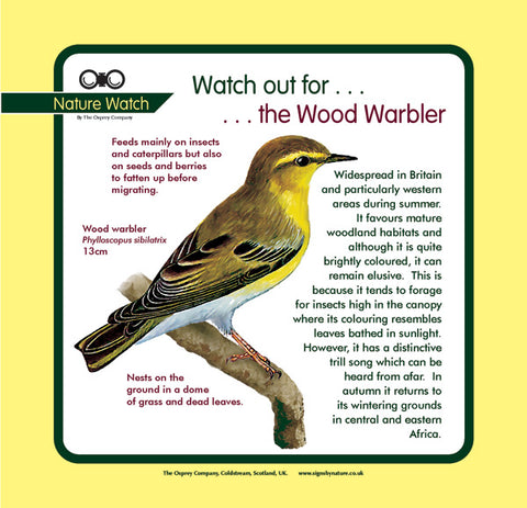 'Wood warbler' Nature Watch Panel