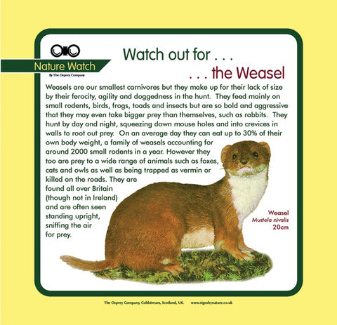 'Weasel' Nature Watch Panel