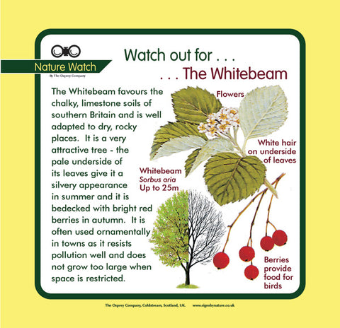 'Whitebeam' Nature Watch Panel
