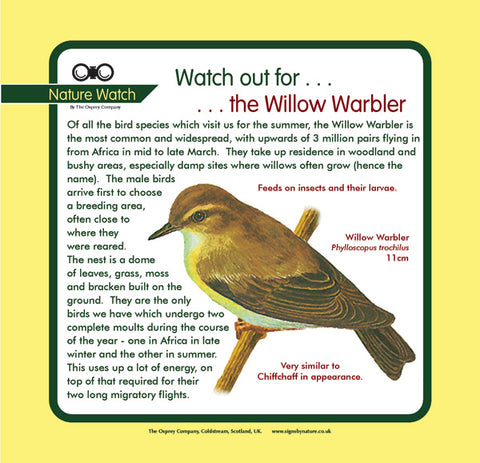 'Willow warbler' Nature Watch Panel