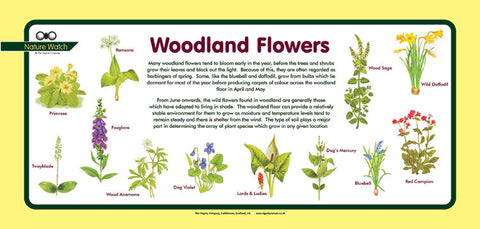 'Woodland flowers' Nature Watch Plus Panel