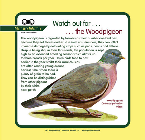 'Wood pigeon' Nature Watch Panel