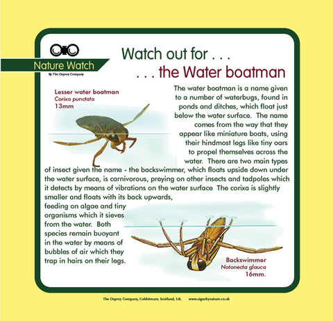 'Water boatman' Nature Watch Panel