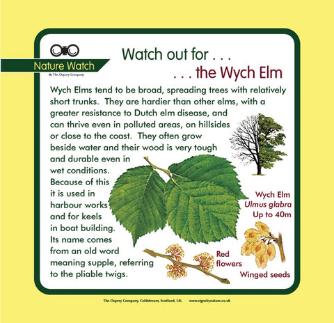 'Wych elm' Nature Watch Panel