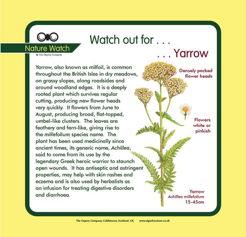 'Yarrow' Nature Watch Panel