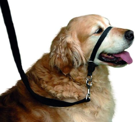 Beaphar Gentle Leader for Dogs - Red
