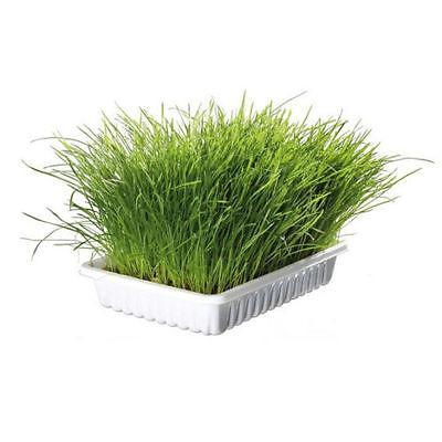 Trixie Cat Grass Including Tray-Package Pets