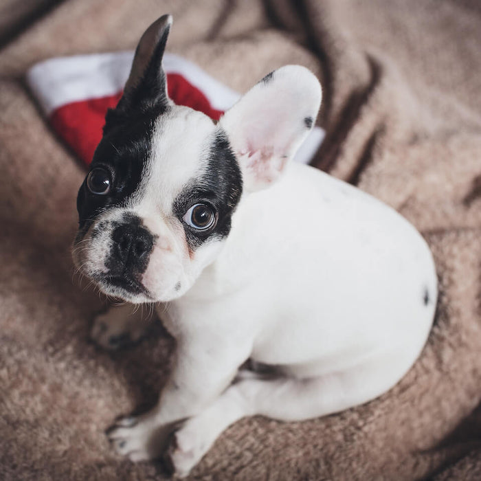 Tips For Keeping Your Pet Safe During The Holiday Season