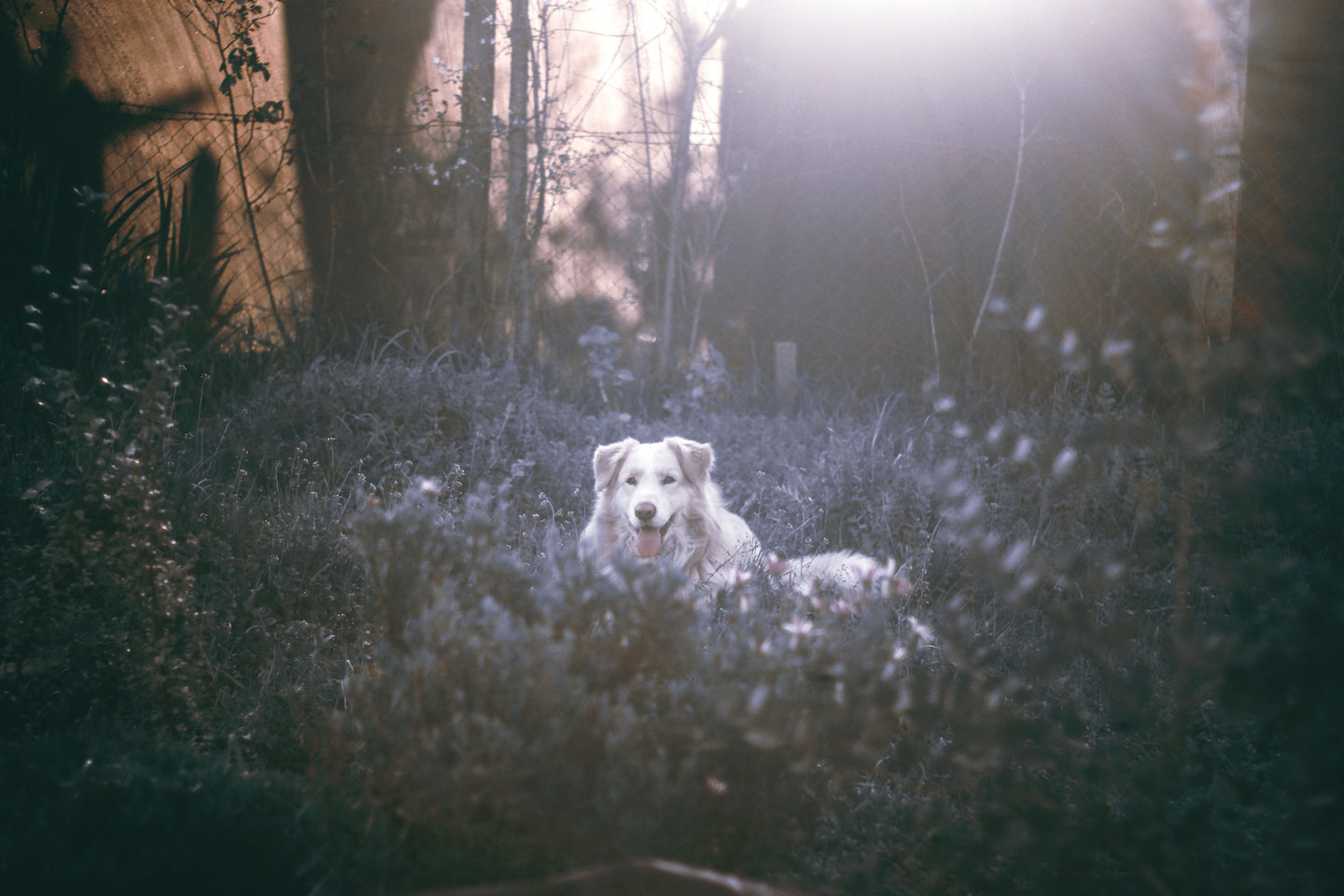 Alabama Rot: What Pet Owners Need To Know