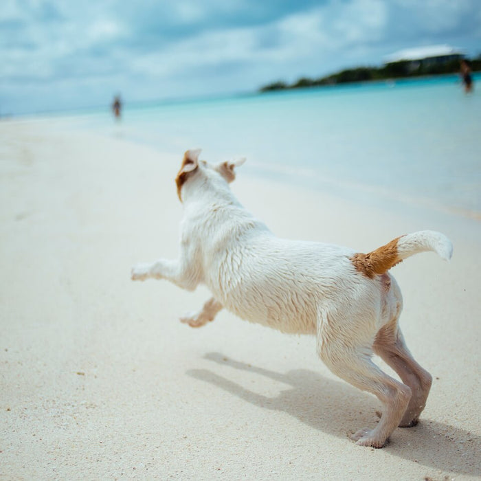 Taking Pets Abroad: From Microchipping to Pet Insurance