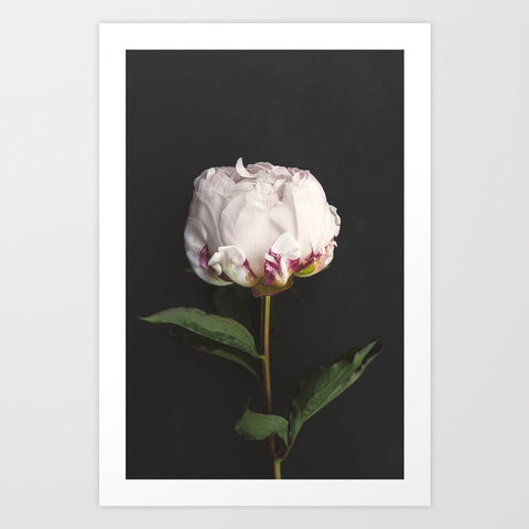 Peony- Simple Perfect