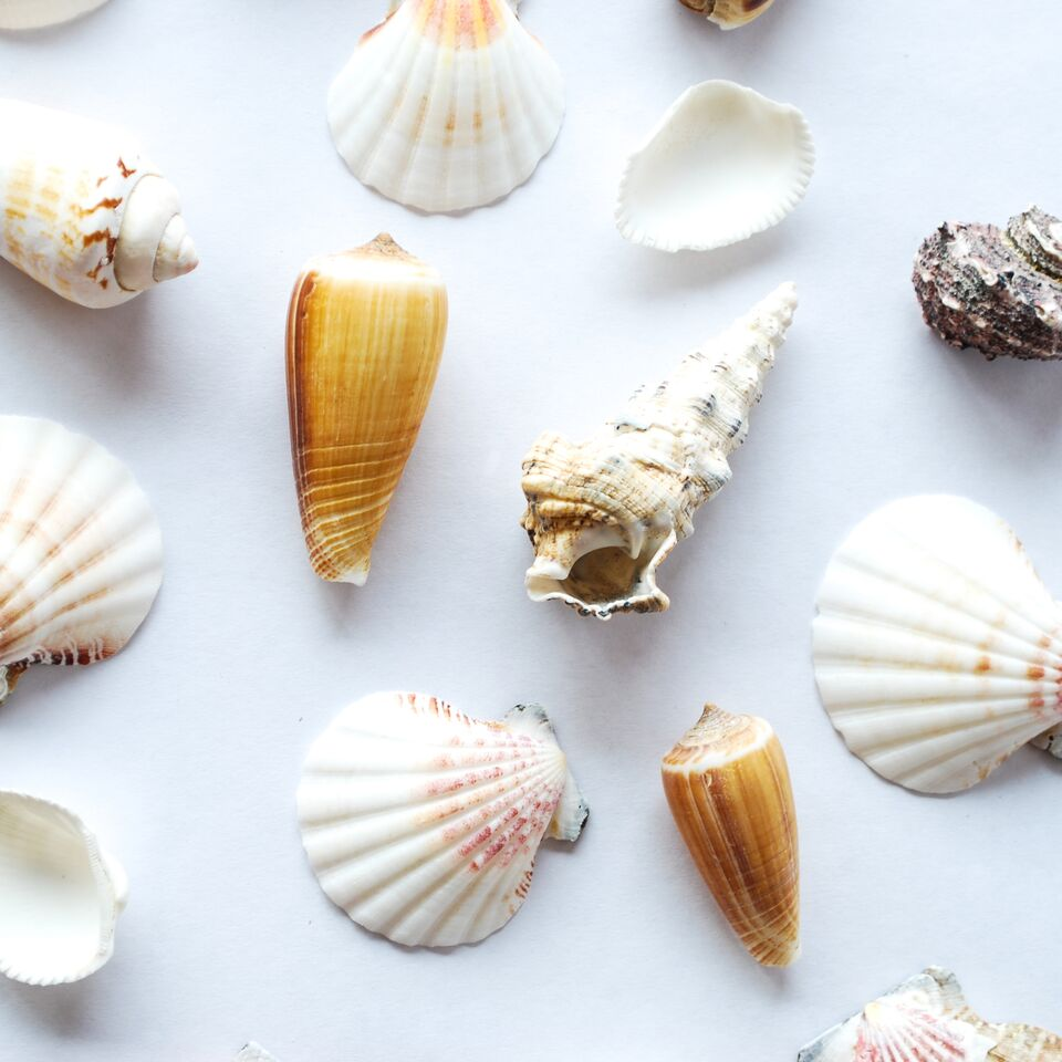 Assorted Sea Shells