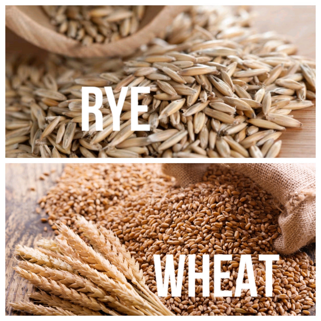 Why Rye is Better Than Wheat