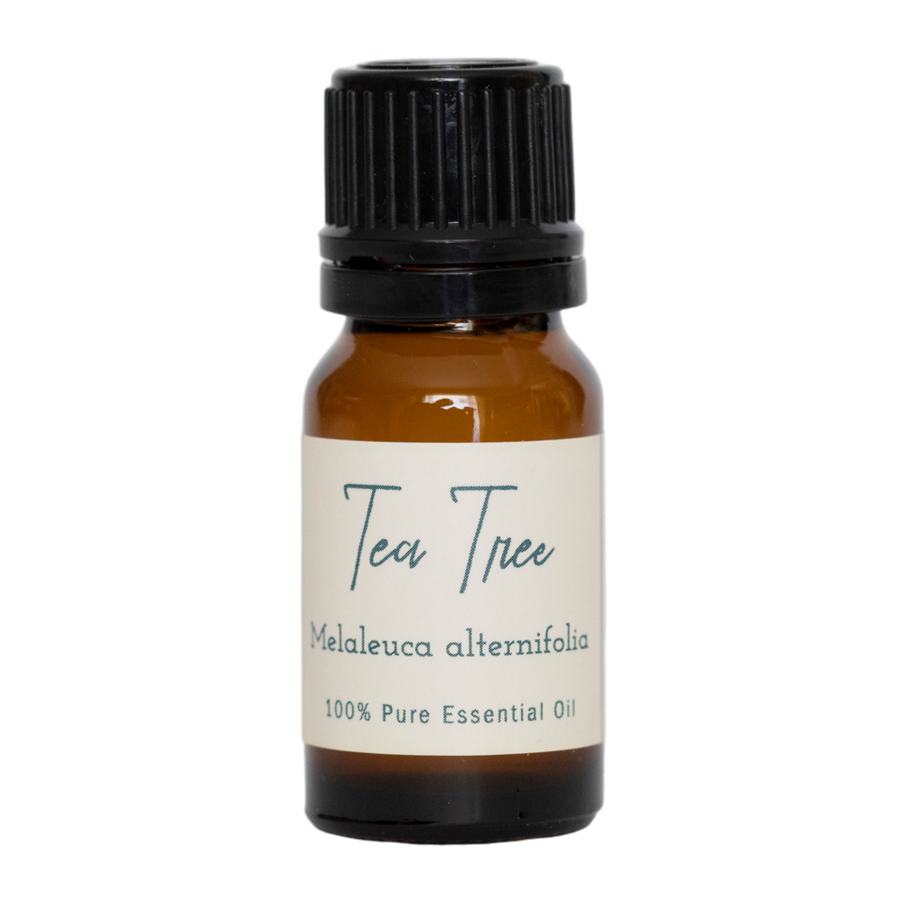 Tea Tree | Melaleuca alternifolia