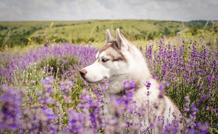 Aromatherapy for our Furry Friends
