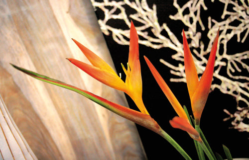 One Strelitzia Wallpaper 1044