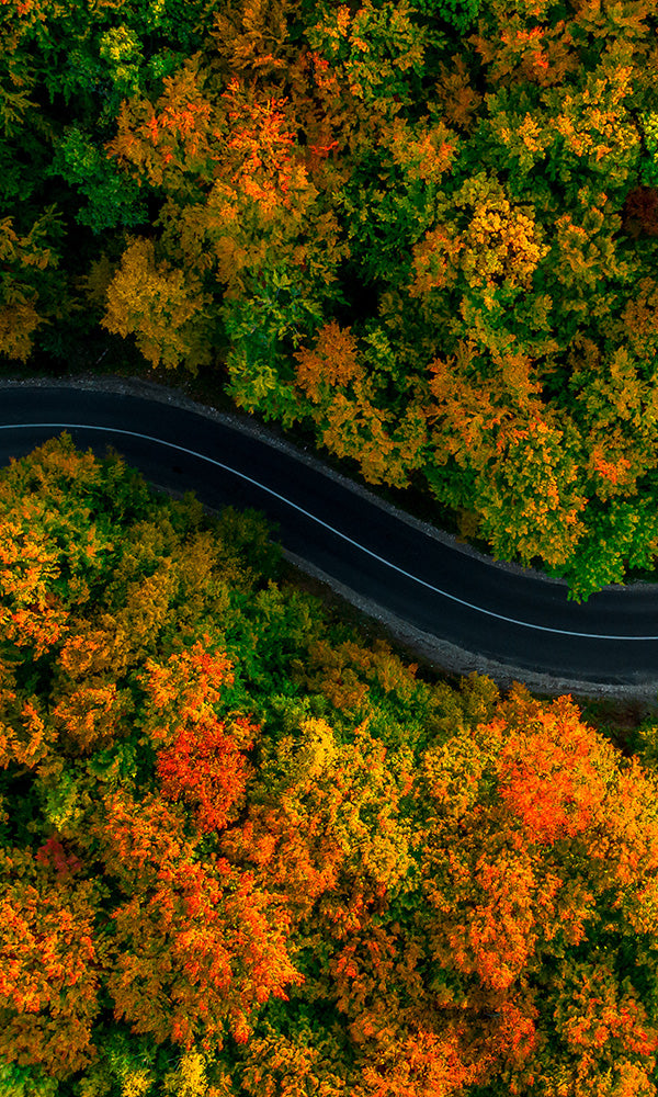 Aerial Views Driving Through an Autumn Forest 2001071