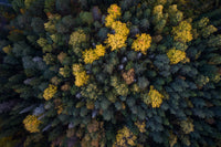 Aerial Views Spotted Foliage 2001073