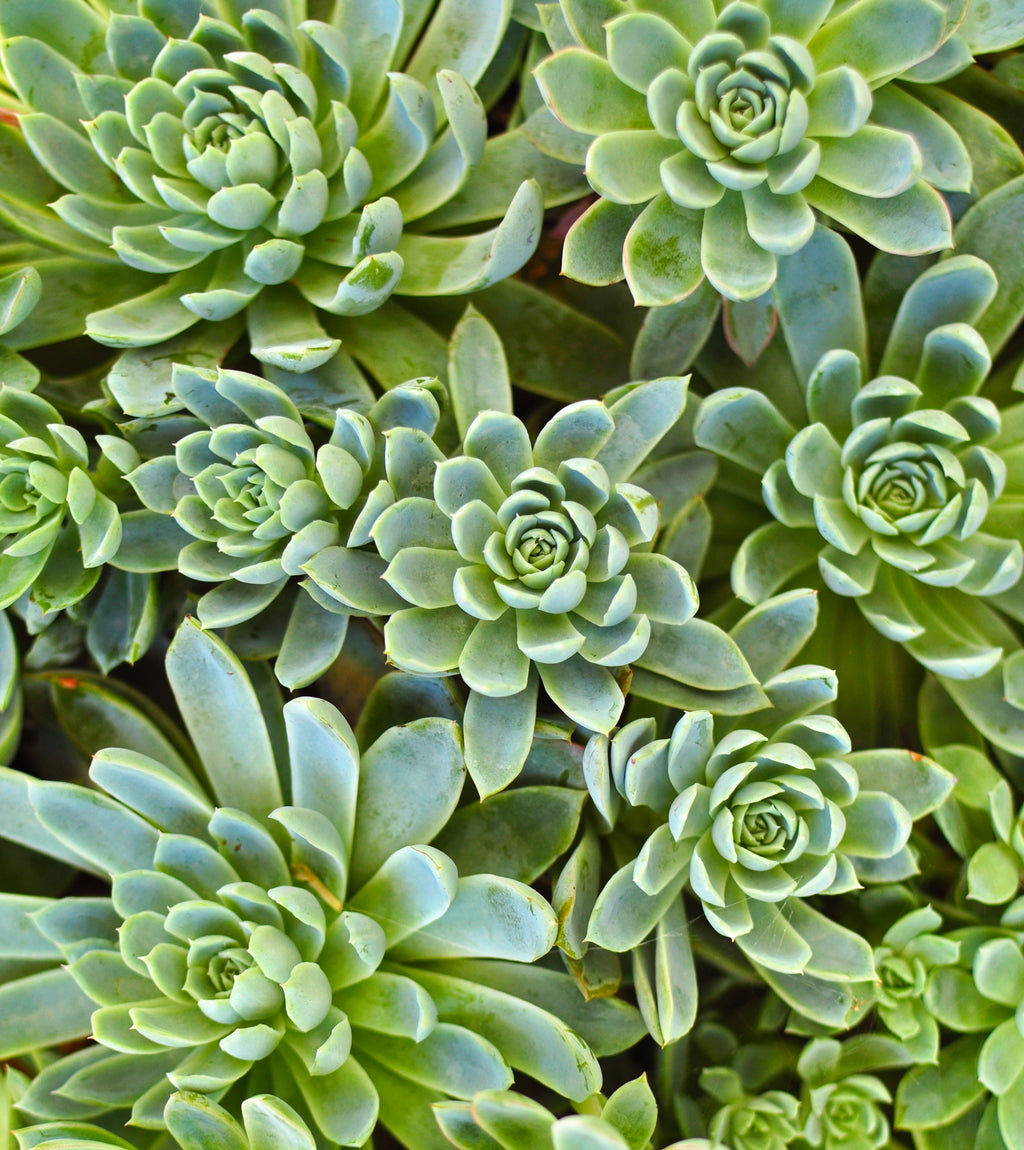 overgrowth succulents nature wallpaper mural