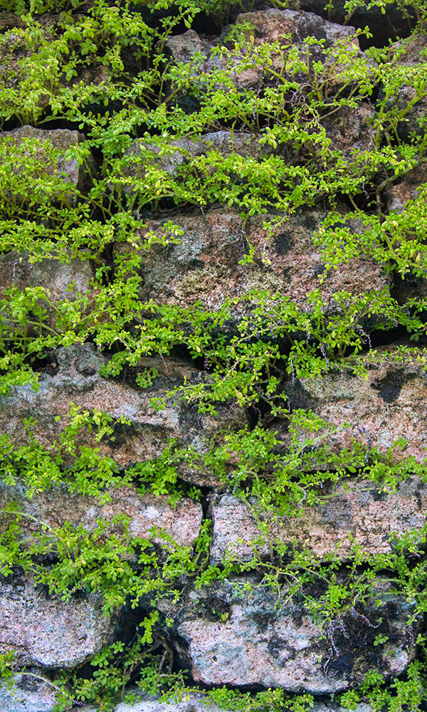 Overgrowth Mossy Stone 2001107
