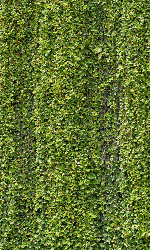 overgrowth hanging vines living wall wallpaper mural