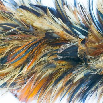 Solstice Feather Ribbon Wallpaper 2001013