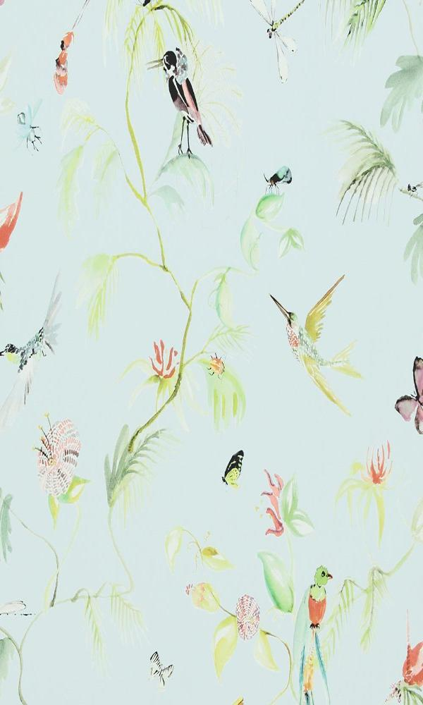 Designed for Living Humming Bird Wallpaper 17711