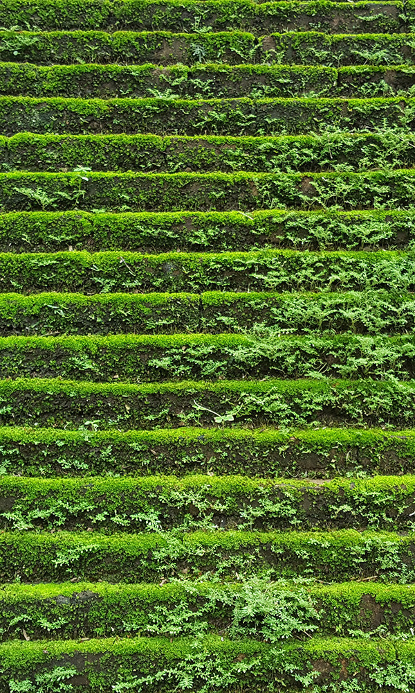 overgrowth mossy steps living wall wallpaper mural